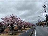 桜 川沿い.jpg